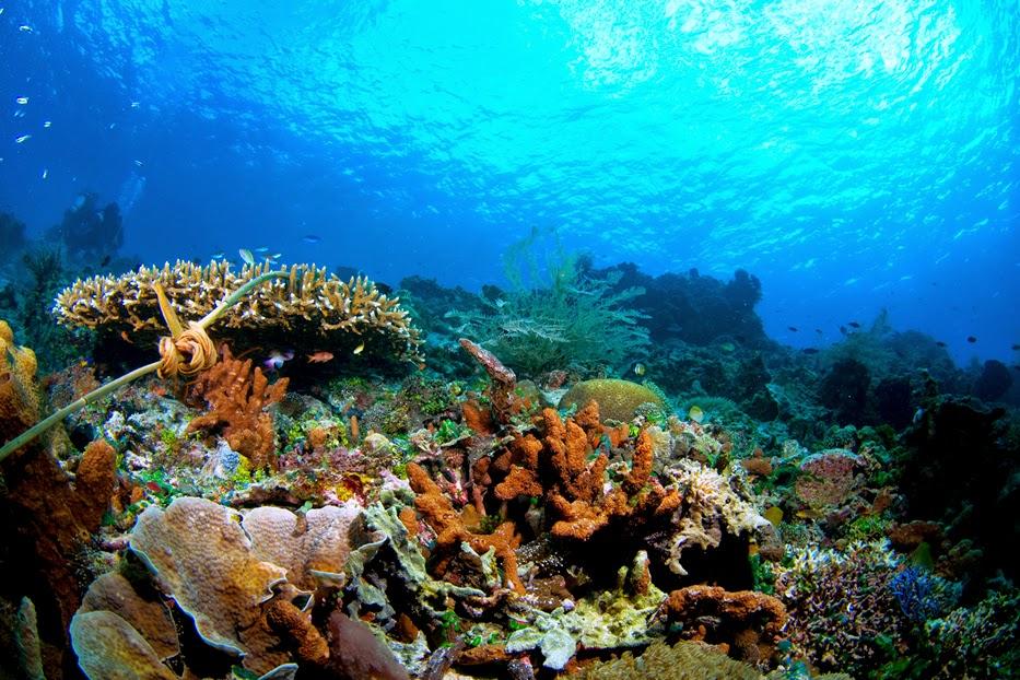 Taman laut Bunaken indahnya Indonesia