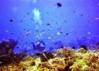 Keindahan Bawah Laut Bangsring Underwater yang Memukau